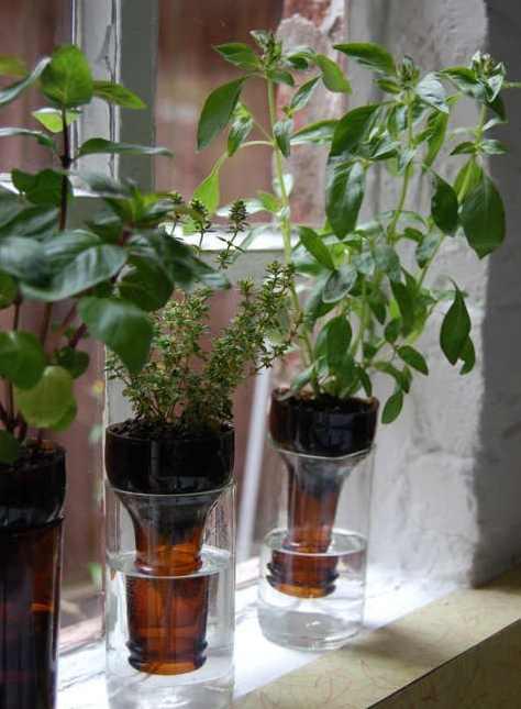 Membuat pot tanaman hias dari botol minuman bekas