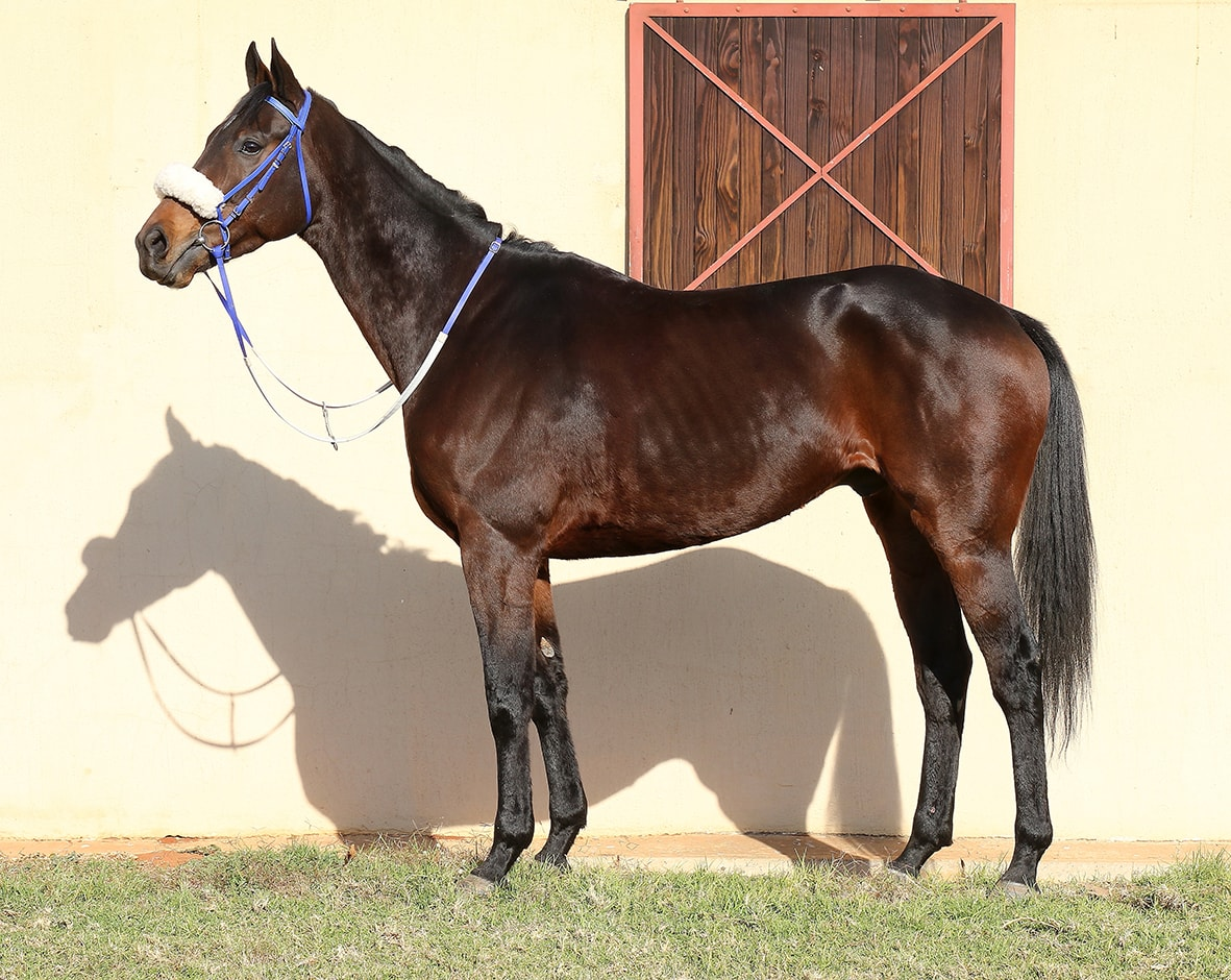 Liege - Horse - Breeder: Maine Chance Farms (Pty) Ltd - Sire: Dynasty - Dam: Lyrical Linda by Jallad (USA) - Vodacom Durban July 2018