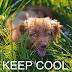 Διατηρήστε το σκύλο σας δροσερό!....