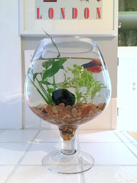 decorative betta fish centerpiece