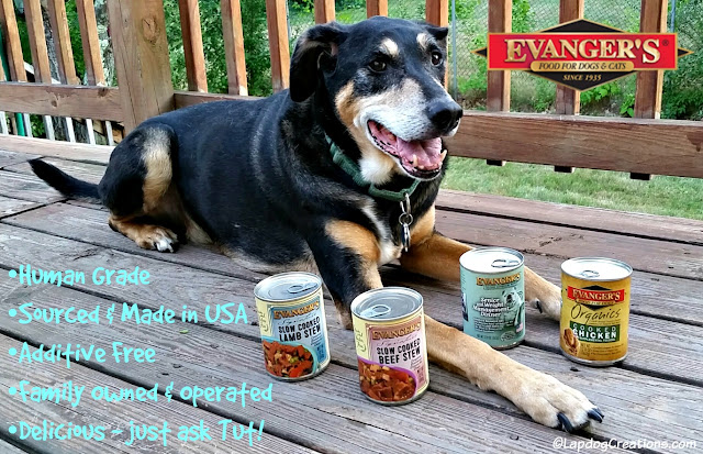 Senior hound mix dog with Evanger's dog food