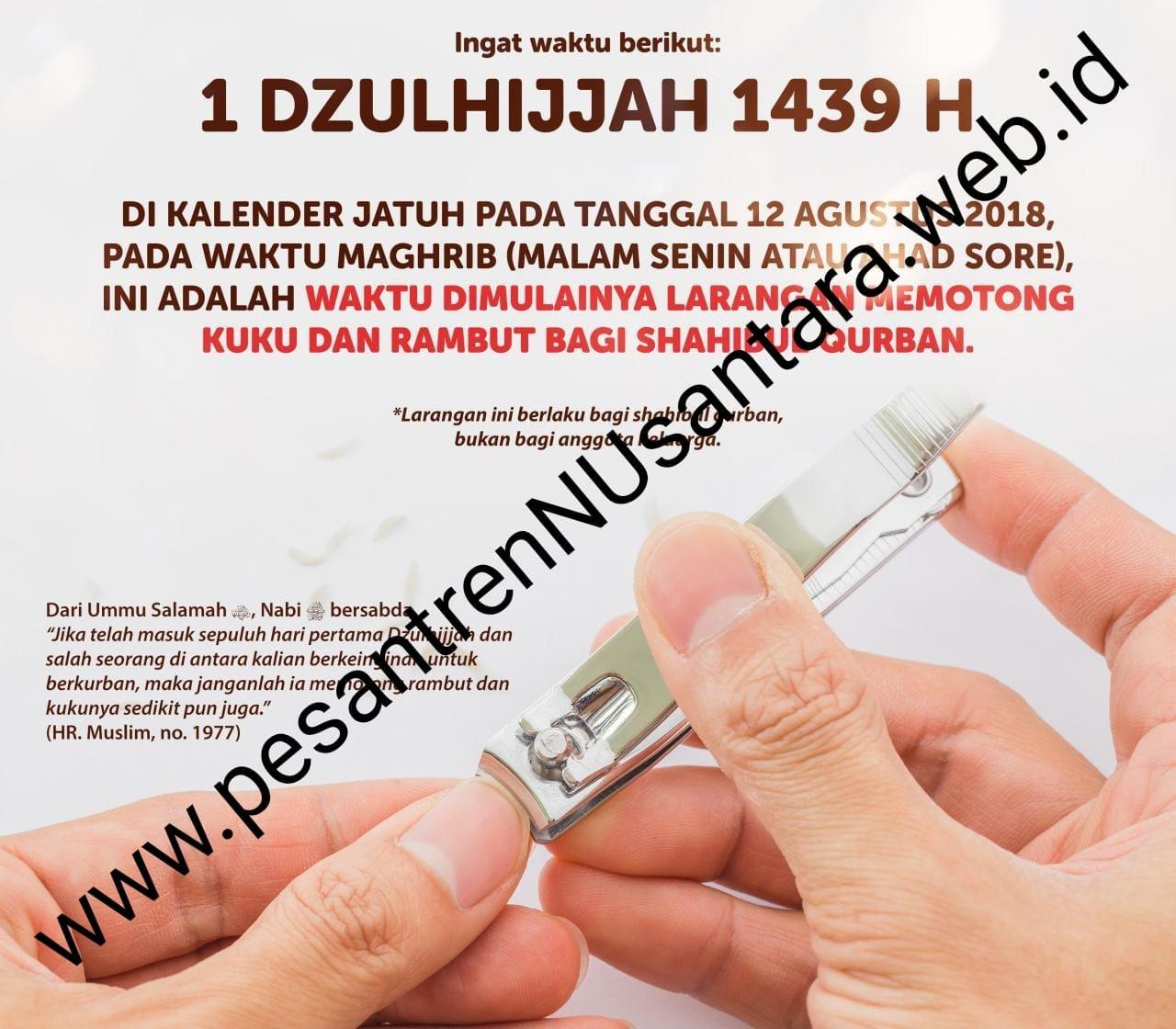 Hukum dan hikmah larangan memotong kuku bagi mudhohhi - Pesantren ... cee8833143