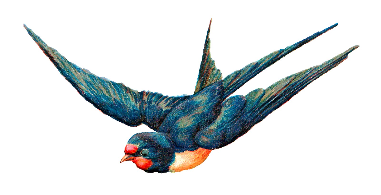 Antique Images: Free Digital Blue Bird in Flight Animal ...