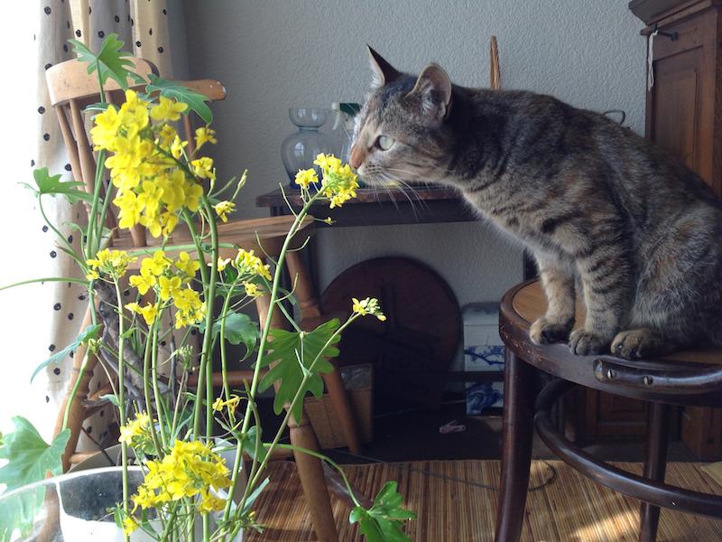 猫の成長が止まるのはいつ?大きさは最大どれくら …