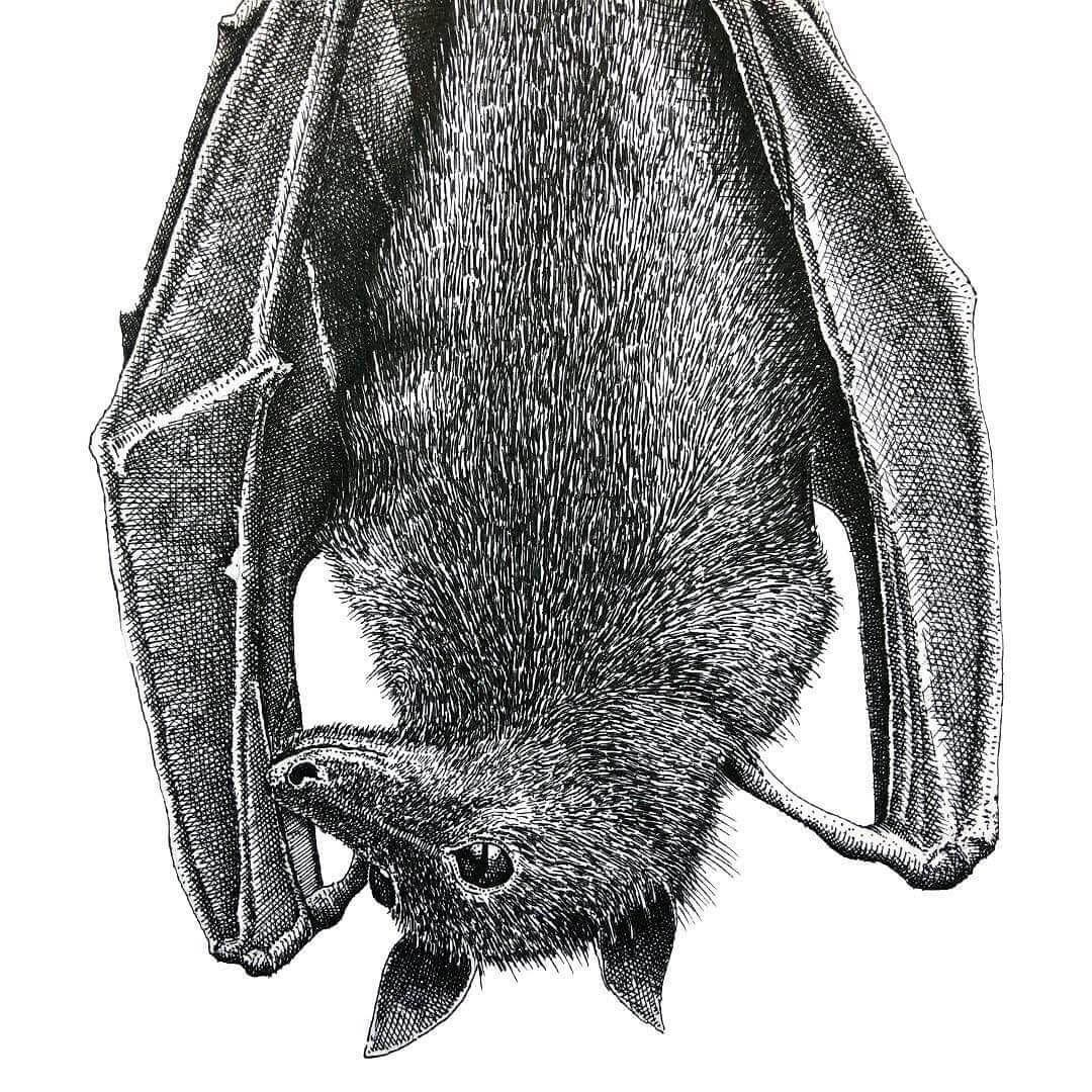 07-Fruit-Bat-Gaspar-Animal-Stippling-and-Cross-Hatching-B&W-Drawings-www-designstack-co