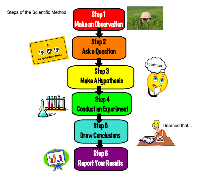 steps of the scientific method essay The scientific method is the process by which science is carried out as in other areas of inquiry, science (through the scientific method) can build on previous knowledge and develop a more sophisticated understanding of its topics of study over time.