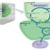 Biosintesis dan Transport Sukrosa pada Tanaman Tebu