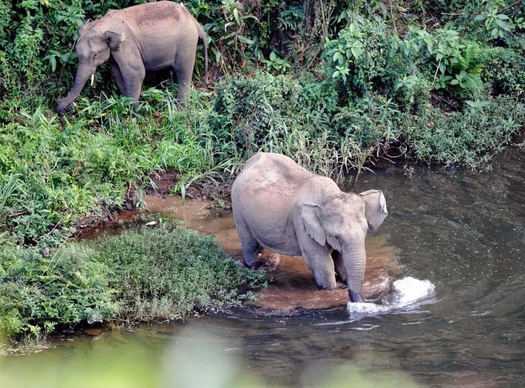 éléphants sauvages au tamil nadu