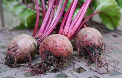 buah bit kaya manfaat dan khasiat