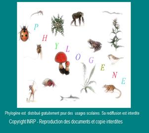 phylogene gratuitement
