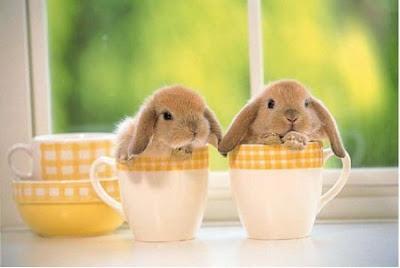 photo drôle pour pâques