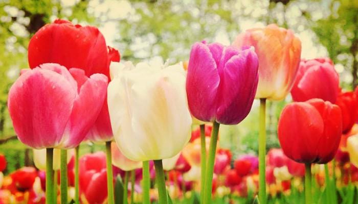 Flor y jardin