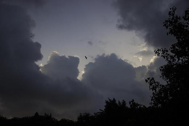 skywatch, mumbai, clouds, bird, india, monsoon , my archives,