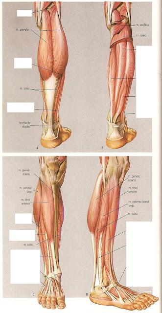 La profiláctica a la curvatura de la columna vertebral