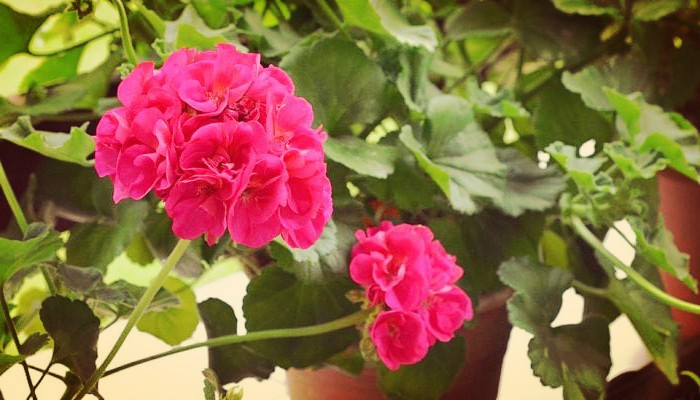 Plantas de exterior fuertes