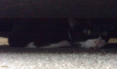 Gracie under the sofa