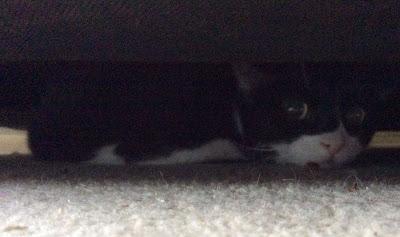 Gracie under the sofa
