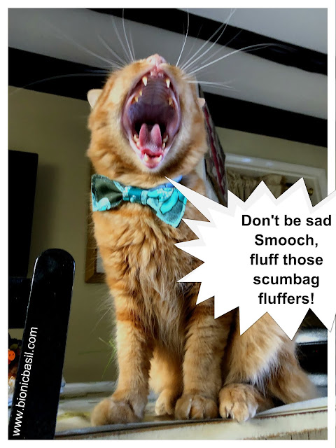 Fluff Those Scumbag Fluffers said Fudge @BionicBasil® The Pet Parade