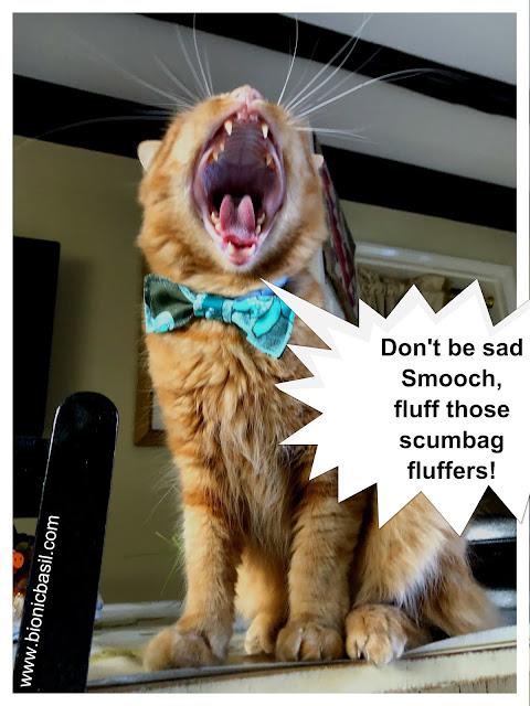 Fluff Those Scumbag Fluffers said Fudge @BionicBasil® The Pet Parade
