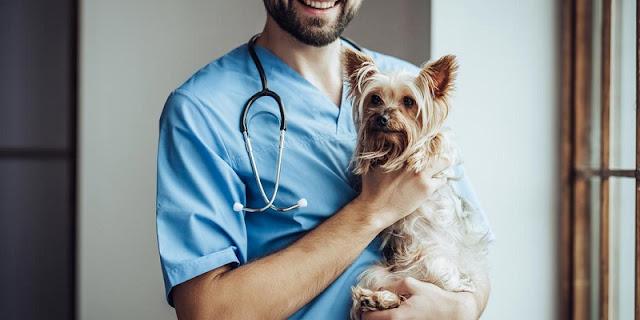 Vacinas em uma viagem com cachorro para Miami