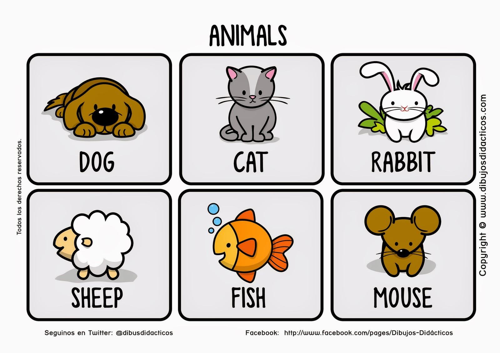 Todos Los Animales En Ingles Top Viernes De Febrero De