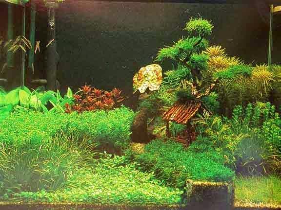 Jenis Gaya dan Desain Aquascape | Aquascape Hobi