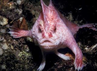 πλάσματα στον πλανήτη μας που σίγουρα δεν έχετε ξαναδεί!