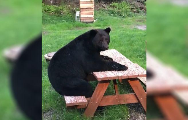 Медведь присел отдохнуть во дворе дома