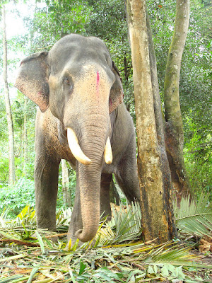 Elephants have significant role in Kerala Mythology