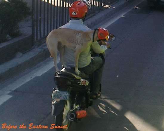 Zooming in on Motorcycle Dog
