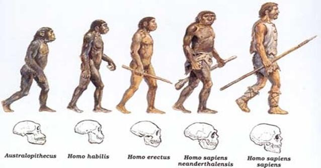 Somos descendentes dos Macacos