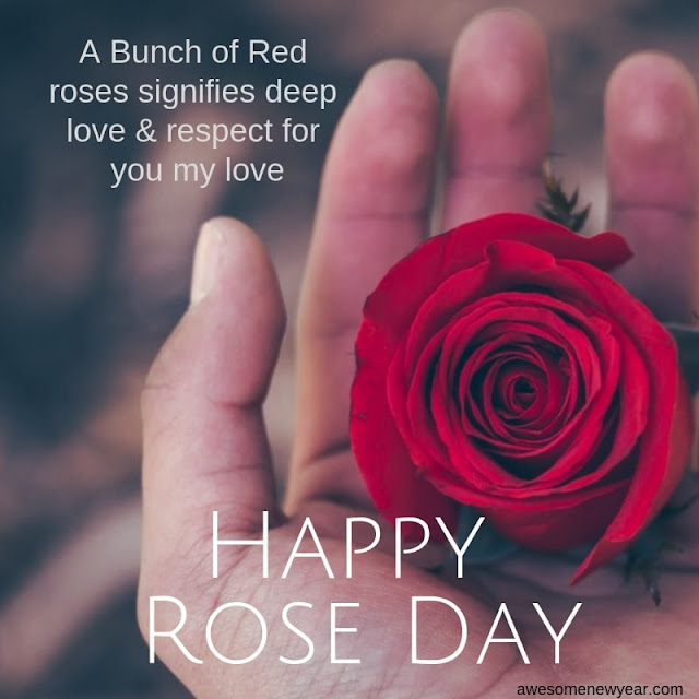 Happy Rose Day 2019 Quotes