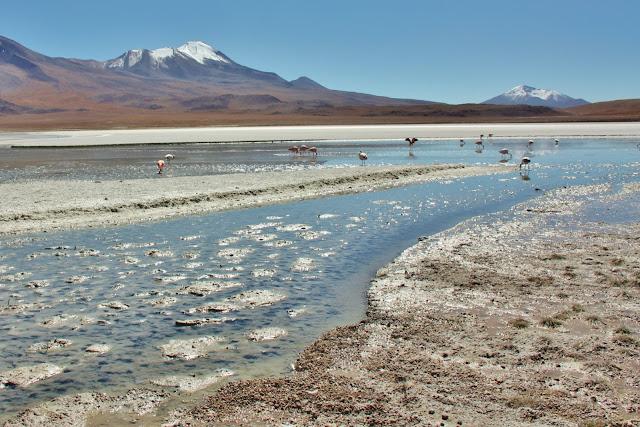 Laguna Honda, uma das lagunas altiplânicas da Bolívia
