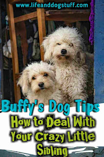 How to Deal With Your Crazy Little Sibling - Buffy's Dog Tips.