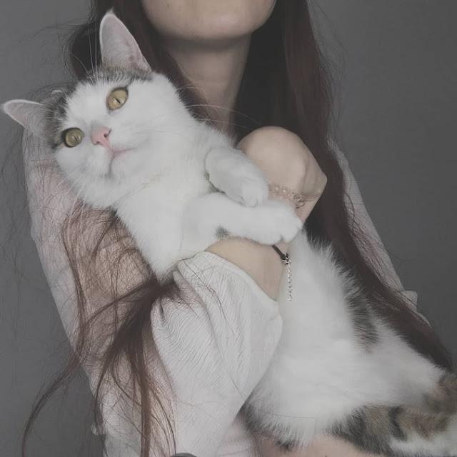 Twój kot nie pragnie poznać smaku rodzicielstwa - czyli dlaczego kastracja jest taka ważna i co warto o niej wiedzieć
