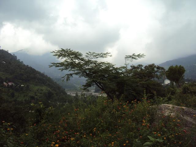 near palampur