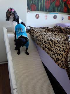 rampas com protetor lateral para cães