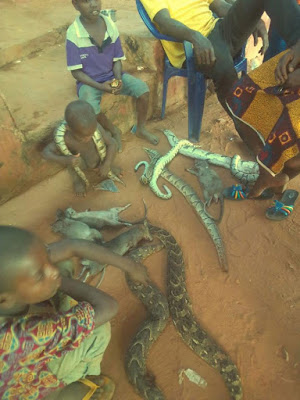 Little children seen playing with snakes, bush rats in Edo