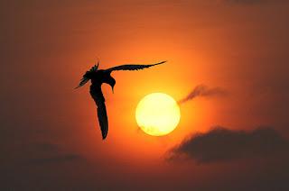 Foto Siluet Cantik Indah Evening Breeze Stars Gambar Fotografer