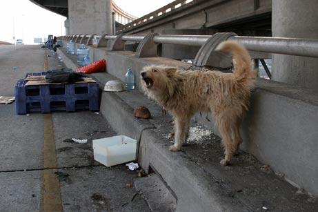Gambar seekor anjing terbuang di lebuhraya.