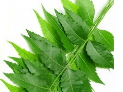 Benefits of Neem for hair, skin and health Helps to treat skin infections