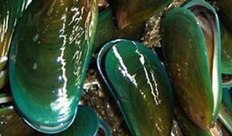 Mejillón de labio verde