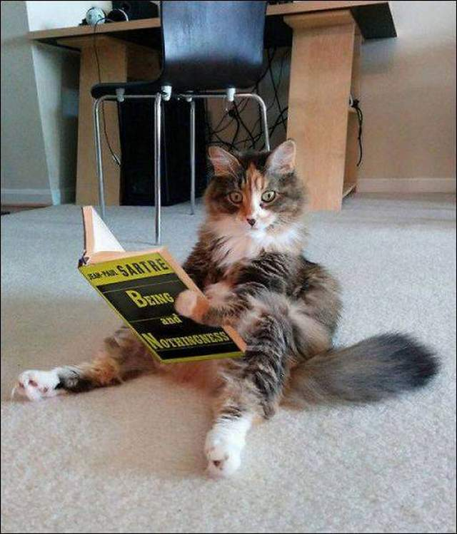 Funny cats - part 238, funny cat photos, cat pictures, cute cat photo