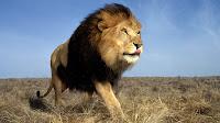 BORN FREE? NO, BORN CAPTIVE TO BE KILLEDAFRICAN LIONS