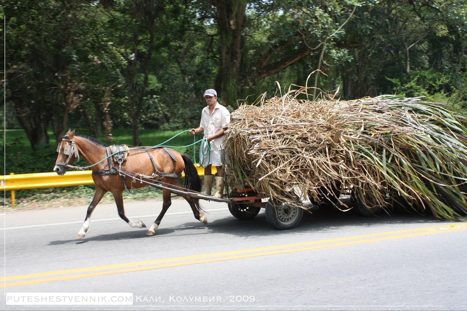 Колумбиец и лошадиная повозка с тростником