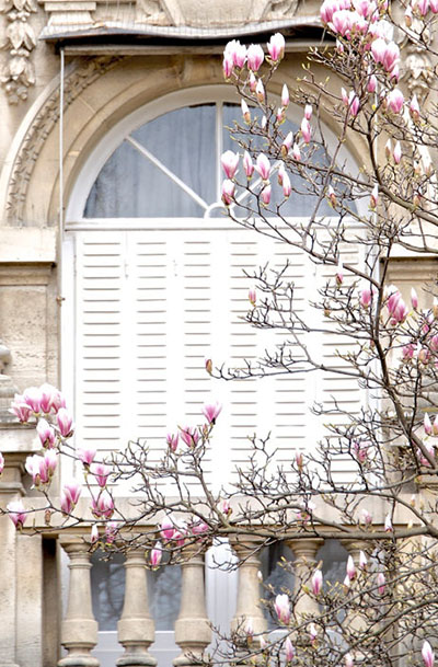 Luxury Paris Photography Magnolias Paris Print Extra Large Wall Art