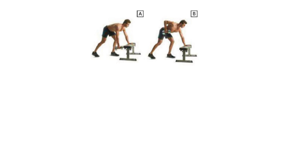 Supported Single-Arm Dumbbell Row