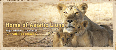 Gir National Park - Best Place to visit in Gujarat
