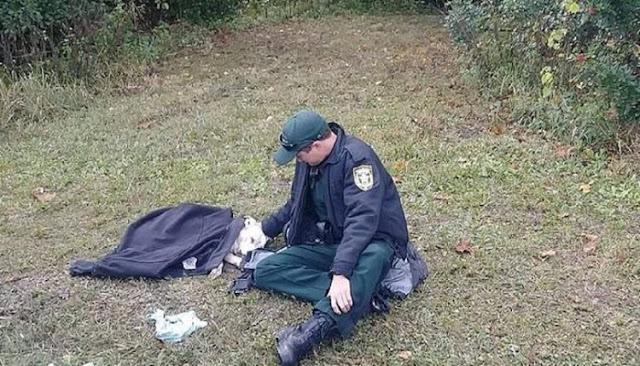 Αστυνομικός προσπαθεί να ηρεμήσει σκύλο που τον χτύπησε αυτοκίνητο και τον σκεπάζει με την στολή του