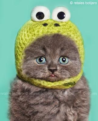 gato con gorrita chistosa